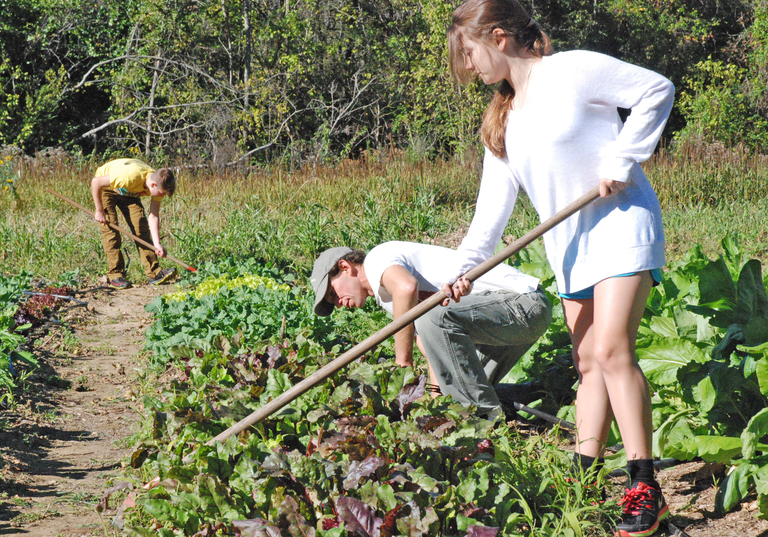 """Scenic Roots"" to Feature Baylor's Organic Garden"