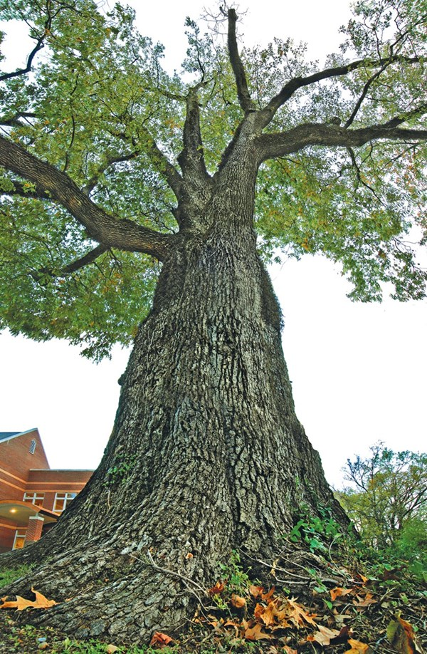 Oldest Tree_72.jpg